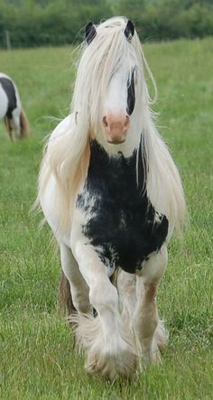 Reminds me of another horse I had...Domino. She didn't have such a luxurious mane or tail, though.