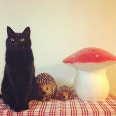 Black cat ランプを秋っぽく🍄 芸術の秋ということで…お絵かき#黒猫 #黒猫部 #黒猫同盟 #くろねこ #くろねこ部 #クロネコヤマト#blackcat #blackcatsofig #blackcatsclub #blackcatlove #instacat #ilovemycat #catsofinstagram #catstagram  #猫のいる暮らし #猫のいる生活 #猫好きさんと繋がりたい #heico #heicolamp #ぐりとぐら