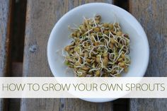 How to Grow Your Own Sprouts (No Soil Required) at lifeyourway.net