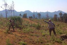 Los operativos en Tacámbaro arrancaron elpredio conocido como La Pitaya, dónde un particular destruyó más de 15 hectáreas de bosque para instalar aguacates y ollas de captación de agua, pero ...