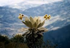 Resultado de imagen para flores colombianas en via de extincion