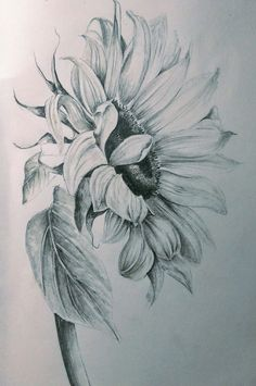 Pencils sunflower drawing, realistic flower drawing, pencil drawings of flowers, sunflower art, Realistic Flower Drawing, Pencil Drawings Of Flowers, Sunflower Drawing, Flower Sketches, Sunflower Art, Sunflower Tattoos, Drawing Sketches, Flower Sketch Pencil, Cool Pencil Drawings