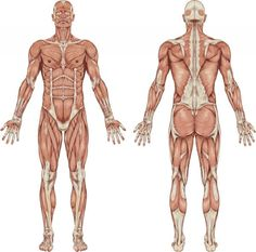 have you had a sports injury? your body may be compensating and, Muscles