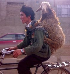 Afghan man carries a goat on his back while riding a bicycle.