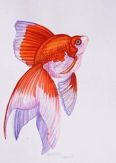 Goldfish White Background by HouseofChabrier.deviantart.com on @deviantART