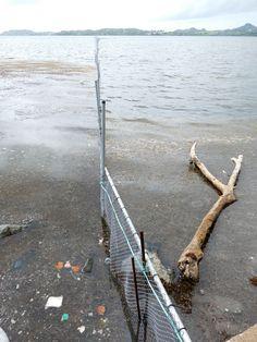 Point sargasses au Robert et au françois en Martinique le 09/06/18 - Images du jour et des autres jours: https://madikeravoyages.fr/crbst_549.html