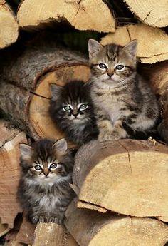 Three little kitties sitting on woods