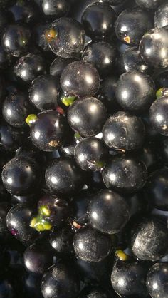 black night shade fruit