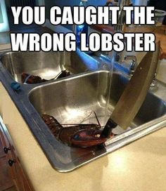 Funny Pictures 24/7 @ http://funnypictures247.com/post/funny-pictures-1866/