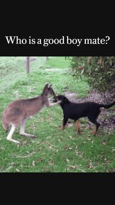 Cute Wild Animals, Cute Little Animals, Happy Animals, Animals Beautiful, Animals And Pets, Funny Animal Jokes, Funny Animal Pictures, Cute Funny Dogs, Cute Funny Animals