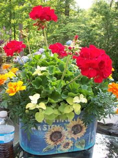 Red geraniums, marigolds