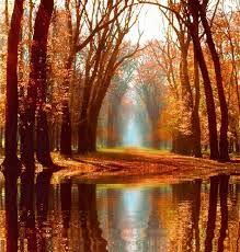 Resultado de imagen para imagen de gif en movimiento de paisajes con arboles