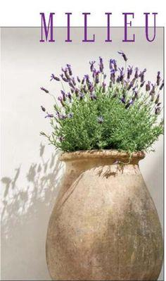 Milieu Magazine by our dear friend Pam Pierce Garden Urns, Garden Plants, Small Gardens, Outdoor Gardens, Olive Jar, Spanish Garden, Garden Inspiration, Container Gardening, Bonsai