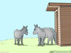 Image titled Care for a Donkey Step 1
