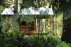 Off-grid rainforest cabin built from scratch has minimal site impact