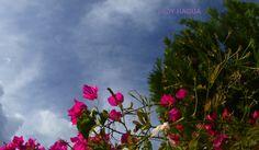 Cielo y flor