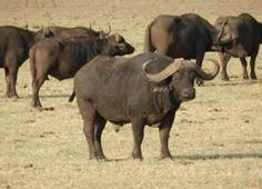 7 Days Masai Mara,lake Nakuru,amboseli And Tsavo West National Park Safaris Attraction Tickets, Tanzania Safari, African Safari, East Africa, Bird Watching, Kenya, National Parks, Scenery, Creatures