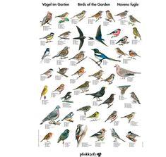 Plakat av fugler i norske hager 70 X 100 cm The 100, Poster, Nature, Pictures