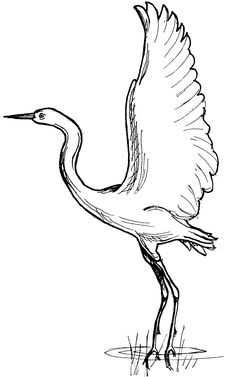 south african blue crane Colouring Pages