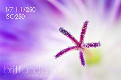 Macro Photography Basics: Get Amazing Closeup Photos