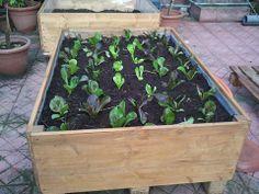 Cassone per la coltivazione degli ortaggi