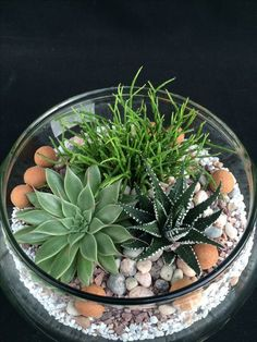 Succulent Arrangements Glass Cactus 42+ Ideas For 2019