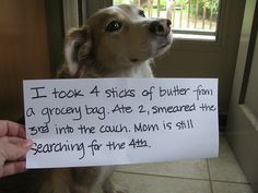 100 Best Dog Shaming Moments. These are so hilarious.  All dog-lovers will enjoy this.  lol
