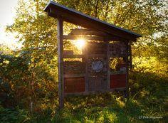 https://flic.kr/p/Ngk9TF | Der Herbst an der Berkel in Billerbeck | Im Münsterland 2016 Weitere Bilder sind auf www.billerbeck.org