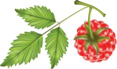 Png Photo, Free Pictures, Raspberry, Plant Leaves, Clip Art, Plants, Image, Stickers, Raspberries