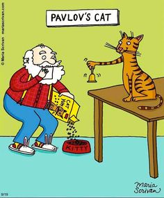 El gato de Pavlov