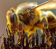 """Bee Venom Can Kill HIV, Study Says --- BUT we are rapidly killing the bees with our """"agricultural system""""  it's dependence on more  more pesticides. - rueth"""