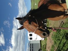 """Say """"hi"""" to Diva. She is a 7 year old Anglo-Arab out of Duchess MA by Eight Degrees Below Zero. Diva is very athletic, a climber and incredible mountain horse. She would make a great endurance or trail horse. For sale."""