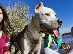 Pitbull Bull Terrier, Pit Bull, Best Friends, Dogs, Animals, Beat Friends, Pitbull, Bestfriends, Animales
