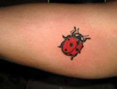 Ladybug Tattoos | Your Tattoos » Ladybug Tattoos