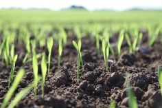 How to Maximize Crop Yields - The Prepper Journal