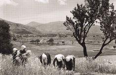 Photograph of Nelly's (Elli Souyioultzoglou-Seraidari, Aidin Σφακιανοί, 1939 Old Photos, Vintage Photos, Greece Photography, Crete Island, Greek Culture, Simple Photo, Old Maps, Great Photographers, Photomontage