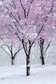 Winter Wonderland.... Relax with this nature photo.