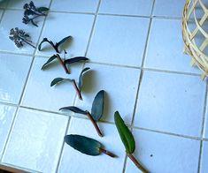 Food Photography Tips Nikon Key: 6082806723 Garden Plants, House Plants, Growing Gardens, Food Photography Tips, Gardening Tips, Garden Of Eden, Plant Leaves, Succulents, Skott