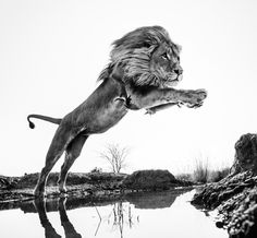 David Yarrow gives you, your weekly dose of inspiring photography