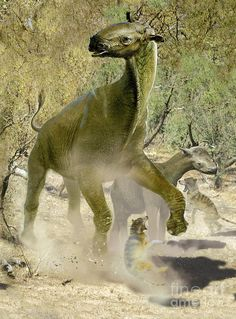 Indricotherium | From the BBC series Walking with Beasts ...