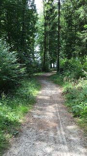 Blog über das Reisen und wandern. Zurzeit vorallem Wandern in der Schweiz. Fernziel ist der Fernwanderweg E1 Switzerland, Country Roads, Outdoor, Blog, Law School, Adventure, Hiking, Forests, Viajes