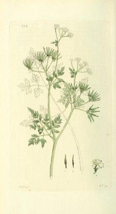 v.4 (1805) - Svensk botanik. - Biodiversity Heritage Library