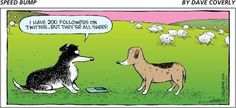 Border Collie humor