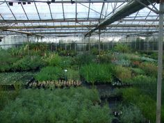 Alternative Eden Exotic Garden: A Plantaholic's Dream