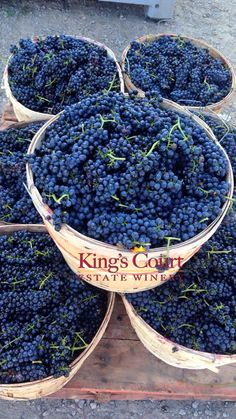 Straight from our Ontario wine vineyard, here is some Baco Noir we picked during the harvest 2015. Wine time!