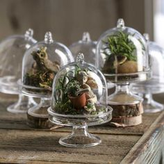Miniature Acrylic Cloches - Bridal Shower - Party & Special Occasions