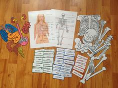 Montessori, Homeschool, Learning, Model, Anatomy, Biology, Studying, Scale Model