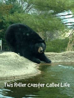 Our Trip to ZooAmerica - This Roller Coaster Called Life