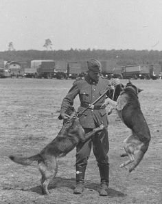 w-ss soldiers training dogs