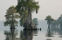 The Great Dismal Swamp Refuge in Virginia is home to the Chesapeake's Lake Drummond, one of only two natural lakes in the entire state. In August 2011, there was a tragic wildfire that devastated much of the wildlife in the area. This happened due to lightning strikes hitting dry land. Fortunately, much has grown back and the area still retains much of its ethereal beauty.
